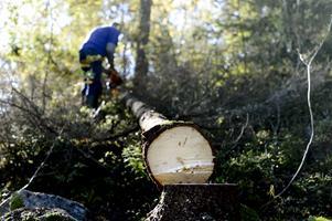 Industrin och skogsbruket slukade mycket av den arbetskraftsinvandring som kom till Sverige. FOTO:  Pontus Lundahl/TT