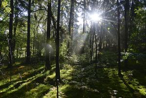 Närheten till skog och natur är viktig för många.
