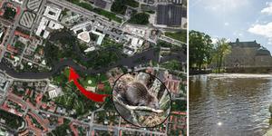 Foto: Arkivbild/TT/Google maps