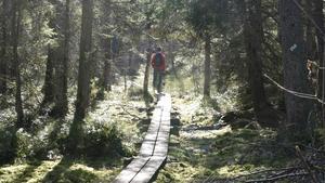 Tyresta nationalpark lockar bland annat med en guidad entimmespromenad i sommar.