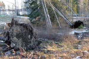 I Grängsbo hade flera höga tallar gett vika.