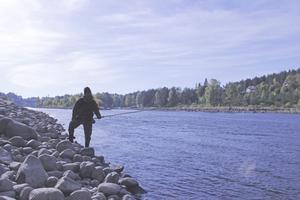 """Havsöringsfångsterna i såväl Dalälven som Östersjön har minskat kraftigt under senare år. """"Det händer något ute i haven just nu som vi inte känner till"""", säger forskaren Erik Petersson."""