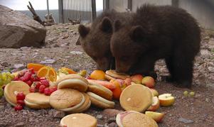 Mums. Björnskötaren Håkan Kratz delikatesser föll både Barney och Bambam väl i smaken.