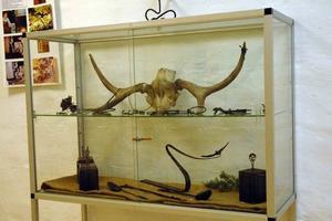 NATURLIGT. I utställningen visas många konstverk som är inspirerade av naturen.