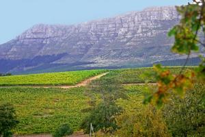 Levererar fynd. Sydafrika svarar bland de röda vinnyheterna för tre klara fynd på den smakrika shiraz/syrah-druvan.