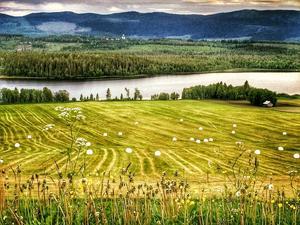 Augusti: Offerdal, Jämtlands kornbod.