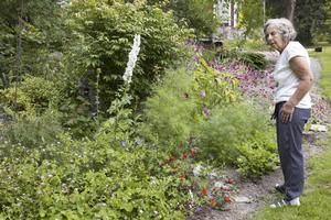 Mycket jobb. Mest jobb lägger Margareta Eriksson ned på sin trädgård på våren. På sommaren är det tid att njuta. Men redan nu börjar hon planera för hur hon ska göra nästa år. Här har hon precis börjat jobba mycket med starka färger.