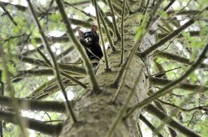 Maja satt fast i trädet i tre dygn.