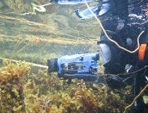 Sveriges Vattenekologer studerar Söderhamns vattenmiljö och har under veckan dykt på flera platser i Söderhamn.