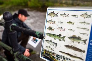 I just Söderhamnsån har det visats sig finnas många olika sorters fiskar, även om vissa av dem sällan siktats. I bakgrunden skymtar Andreas Håberg, natur- och fiskeutvecklare.