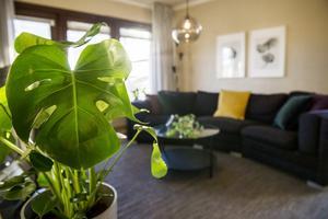 Efter. Växten monstera går som ett tema genom rummet –ovanför soffan sitter tavlor med samma motiv.