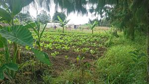Grönsaker levereras två dagar i veckan till ett barnhem.