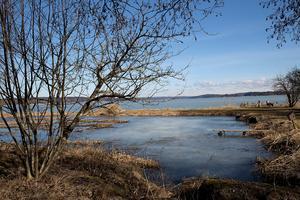Avloppsdammarna i Ytterjärna ligger intill Järnafjärden och Östersjön. Foto: Mats Andersson