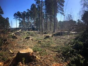 Flera läsare har undrat varför skog avverkats nära badet vid Näsets udde, Glashyttans värdshus och Torpa pensionat.