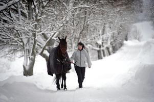 När Nahar kom till Robert Berghs gård för första gången efter att hockeybröderna Sedin köpt hästen fotograferades han vid allén. Nu när karriären avslutas sluts cirkeln på samma plats.