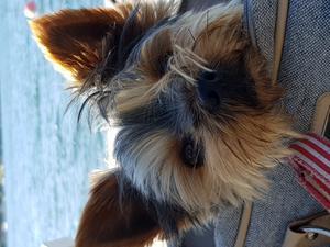 Mille trivs på bryggan på Yxlan, här kan han hålla koll på allt och alla med skön bris i pälsen. Foto: Monica Johansson