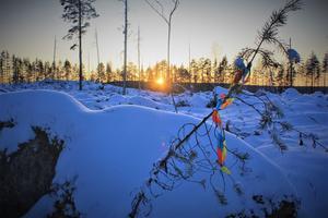 Solnedgång i Prästskogen, december 2019. Hur stor blir kyrkans vinst av 5 hektar avverkad skog i förhållande till de natur- och kulturvärden som för all framtid har förlorats där? undrar debattförfattarna. Foto: Håkan Aronsson