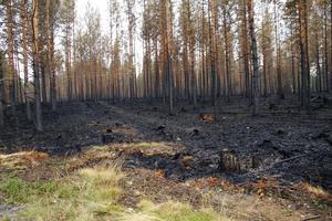 Då räddningstjänsten avslutar insatsen, får skogsägare själva ta över ansvaret för bevakning och eftersläckning.