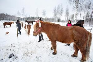 Hästarna följer snällt med för en ridtur i skogen.