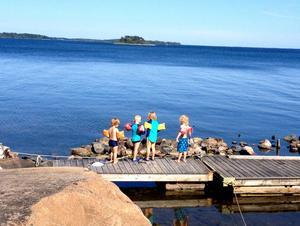 Hannes, Charlie, William och Joel håvar vid Svartlögafjärden.