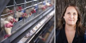 Det är hög tid för ett stärkt djurskydd och att sätta stopp för burarna inom äggindustrin, menar Camilla Bergvall, förbundsordförande för Djurens Rätt. Foto: TT