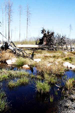 Hälleskogsbrännan är ett unikt område att besöka i sommar.