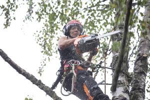 utrustad med motorsåg och handsåg kapar Petra Pavlovská björkens grenar.