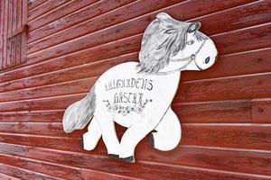 Lillgårdens hästar var länge ett tillhåll för ungdomar då det var en ridskola.