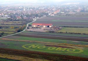 GMO bör bekämpas menar dagens debattör. Foto: AP Photo/MTI, Laszlo Czika