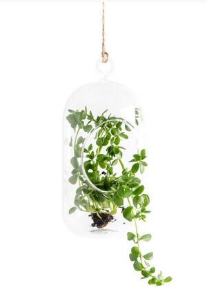 2. Hängande glaskula som man kan stoppa en växt i. 79 kronor på Lagerhaus.