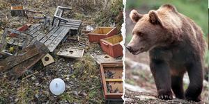 Bilden är ett montage. Bilden på björnen är från ett annat tillfälle. Foto: Privat och TT