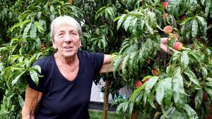 Monica Forsberg visar ett av de mörkast färgade persikorna. Frukterna är fler än hon kan räkna, trots flitigt skördande.