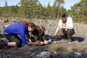 Lotta Nygård, Oskar Norrgrann och David Rocksén förevigar växten strandtrav, en blomma som i Sverige bara finns på några platser längs Ångermanlandskusten.