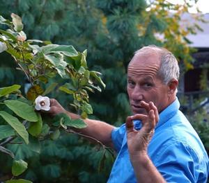 Gerald Deckart är Ösmo Plantshops trädgårdsmästare. Ett jobb som han har 45 års erfarenhet av.
