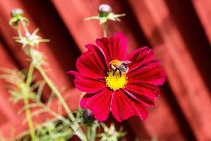 Insekterna trivs i den blomstrande trädgården.