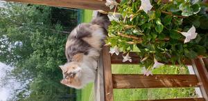 Våran katt Fisen ett charmigt matvrak som alltid letar nya sovplatser. Bild: Susann Gunnarsson