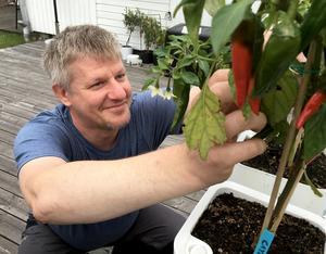 Andreas Carlsson har odlat chili i tio år. Jalapeño och cayennepeppar är favoritsorter som funkar till det mesta.