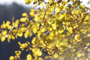 Höstfärger i högsommartid. Den extrema torkan har lett till att vissa träd redan har börjat gå i vila och släppa sina blad.– Det regn som har kommit under försommaren och sommaren har kommit väldigt ojämnt i kommunen. Illa är det överallt, men vissa har det ännu värre, som neråt Närtuna där det är extra torrt, säger Kjell Andersson, skogskonsulent åt Skogsstyrelsen i Norrtälje kommun