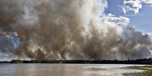 Bild tagen under stora skogsbranden.