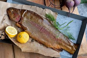 Fiskar är i dag är den mest exploaterade kategorin av alla djur på jorden. Men vi är inte tvungna att se på fiskar som mat. Med den nya vetenskapen om fiskarnas komplexa liv kan vi utveckla ett helt nytt förhållningssätt till våra förfäder i haven, skriver Martin Smedjeback. Foto: Janerik Henriksson, TT