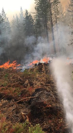 Flera personer från Almunge brandstation hjälper till att bekämpa bränderna i Hälsingland. Här bekämpas elden kring Ängra i Ljusdal.Foto: Kurt Holm/räddningstjänsten