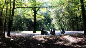 Bild: Privat fotat av Roffe Persson, Ulf Westin och Paul Fogelman. Så här vackra Parkways kan vara, slingrar sig genom lummiga skogar i reservaten. Bilden är tagen vid kort rast, Natchez Trace Parkway Mississippi.