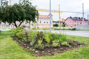 Vid järnvägen är det nu en fin plantering tack vare insamlingen.