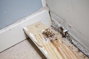 Vägglöss trivs förstås där de är svårast att komma åt. Som bakom lister eller i väggar. De lämnar spår efter sig i form av spillning.