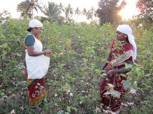 Fairtrde syftar till en hållbar konsumtion som dessutom ger arbetare rättvisa villkor. Foto: TT