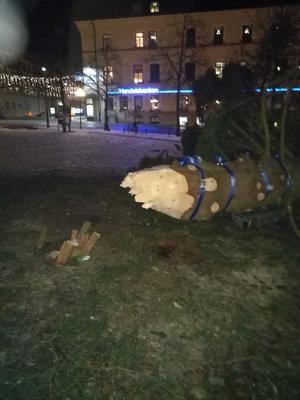 Foto: Privat. Den förbipasserade Falubon fotograferade granen vid 20:30-tiden.