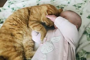 363) Här har vi Emmy tillsammans med vår älskade katt Bertil. Bertil är en riktig goskatt som alltid myser med Emmy. Foto: Hanna bodell
