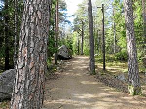 Råbyskogen betyder mycket för alla i området.