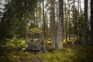 Markägare kan plocka in externa jägare till sina marker om de tycker att det inte skjuts tillräckligt med älg.