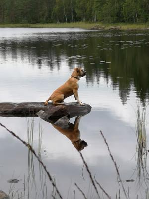 Hugo väntar på att gäddan ska slå i vassen. Vid sommarstugan i Jädraås lördag 10 augusti 2019 Foto: Inger Paulusson